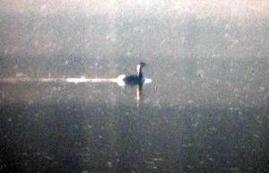 Distant Red-necked Grebe, Boonton Reservoir, Apr. 13, 2013 (iPhone photo by Simon Lane)