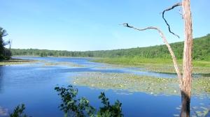 Timberbrook Pond, Rockaway Twp., NJ, June 23, 2013 (photo by Jonathan Klizas).
