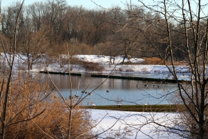 Chatham Sewage Ponds, NJ, Jan. 4, 2014 (photo by J. Klizas)