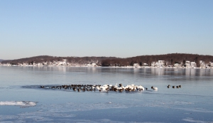 Lake Hopatcong, NJ, Jan. 4, 2014 (photo by J. Klizas)