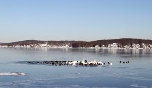 Lake Hopatcong, NJ, Jan. 4, 2014 (photo by J. Klizas)