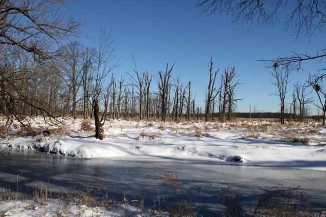 Troy Meadows, NJ, Jan. 4, 2014 (photo by J. Klizas)