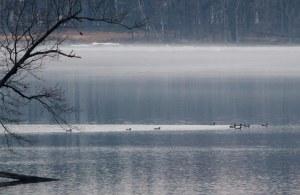 Common Loons at Boonton Reservoir, NJ, Mar. 28, 2014 (photo by Jonathan Klizas)