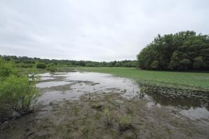 Water Chestnut, Lincoln Park Gravel Pits,  July 13, 2014 (photo by J. Klizas)