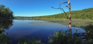 Timberbrook Lake, NJ, (iPhone panorama by J. Klizas)