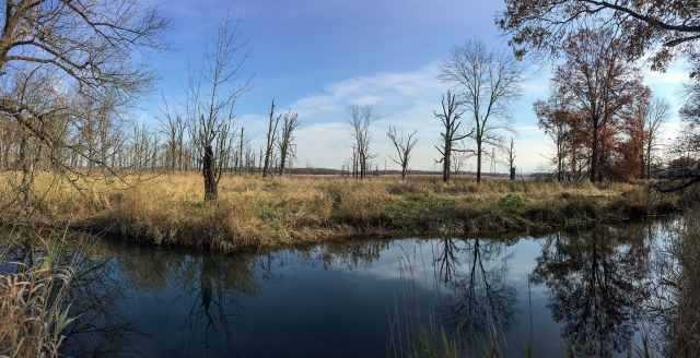 Troy Meadows looking north from Troy Brook, Nov. 9, 2014 (photo by J. Klizas)