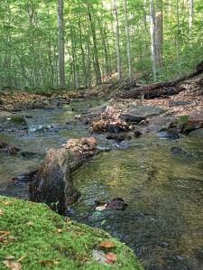 Primrose Brook, Morristown National Historical Park (Jockey Hollow), NJ, May 30, 2015 (photo by Jonathan Klizas)