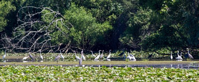 Egrets and Herons, Walker Ave. Wetlands, NJ, July 23, 2015 (photo by Jonathan Klizas)