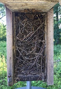 House Wren nest, Great Swamp NWR,  July 10, 2015 (iPhone photo by Jonathan Klizas)