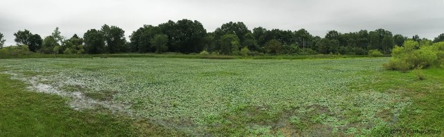 Melanie Lane Wetlands, NJ, July 18, 2015 (iPhone pano by Jonathan Klizas)