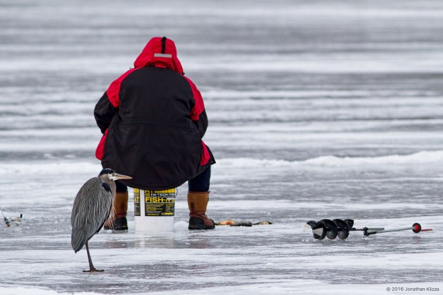 Ice Fishermen at Lake Hopatcong, NJ, Jan. 31, 2016 (photo by Jonathan Klizas)