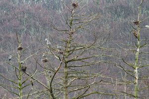 Heronry with Bald Eagles, Rockaway Twp., NJ, Mar. 23, 2016 (photo by Jonathan Klizas)