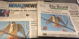 newspap-feathers